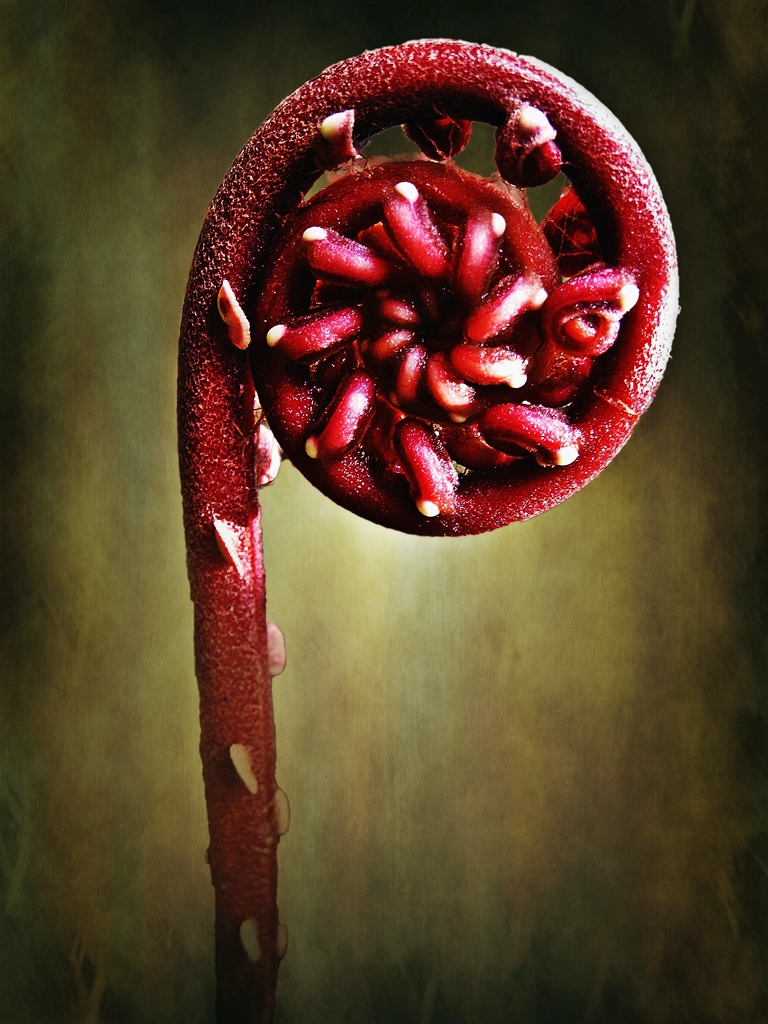 Fern Lollipop