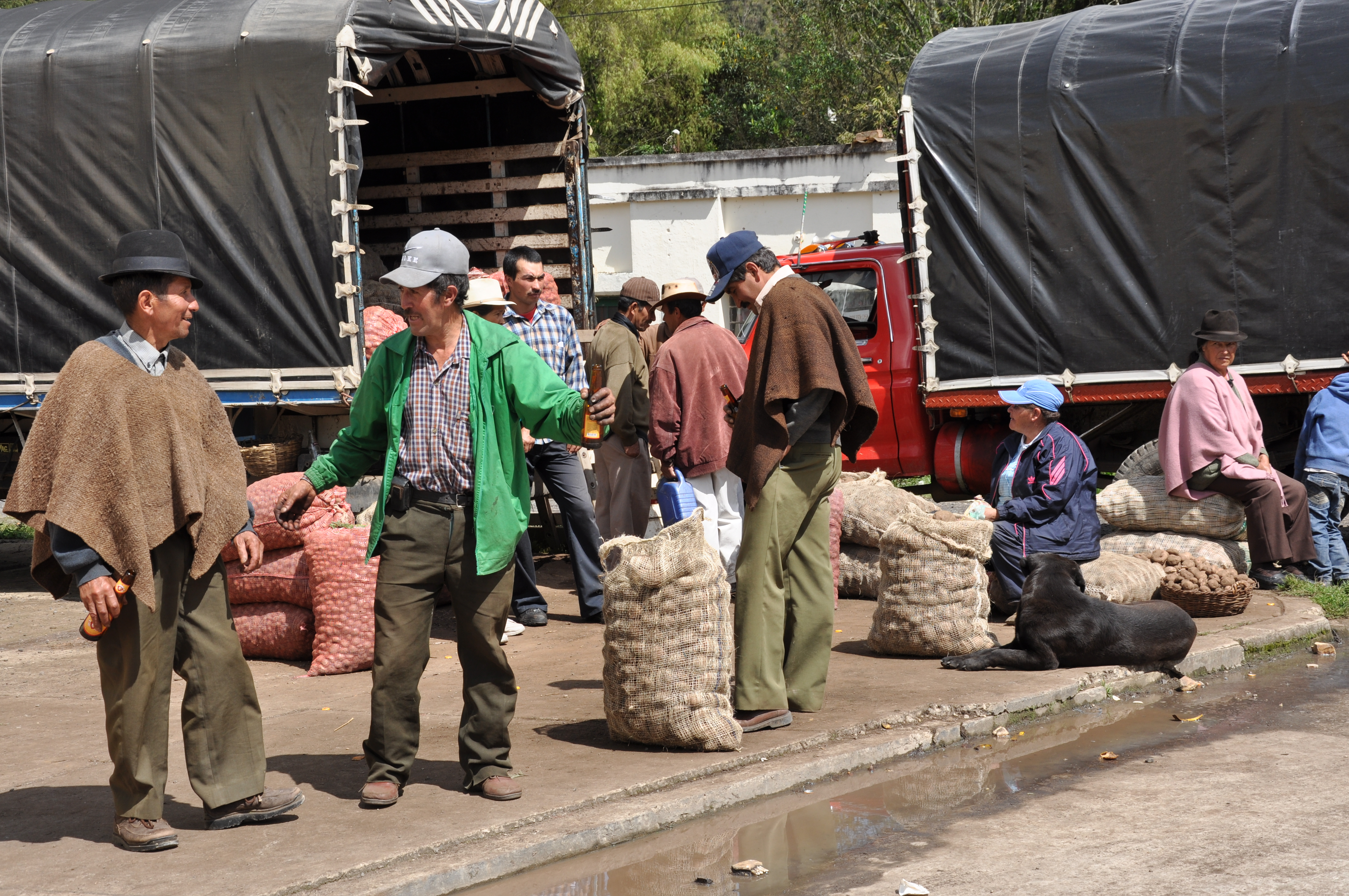 Farmers preparing to sell potatoes in Colombia.