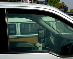 Big Pickup, Little Dog II