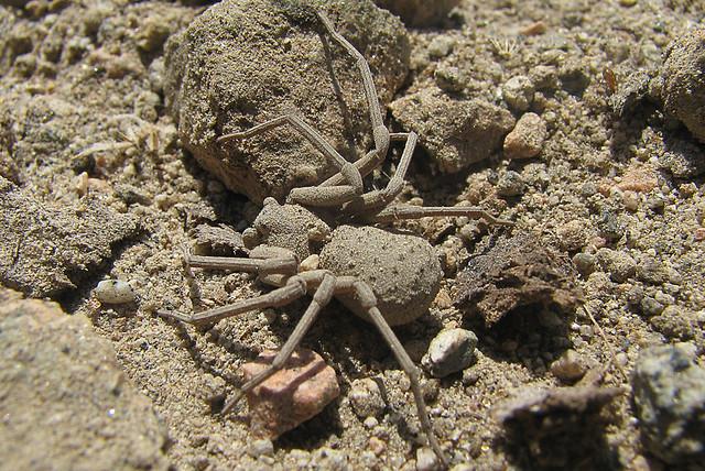 Las arañas mas venenosas - Info - Taringa!