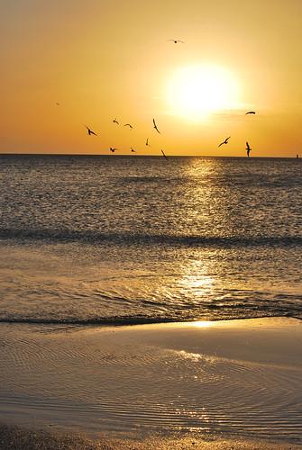 ocean sunset sea bird beach photography gulf florida seagull gull tide low wave derek clearwater liceks