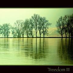 2011 01 29 Rhine Trees