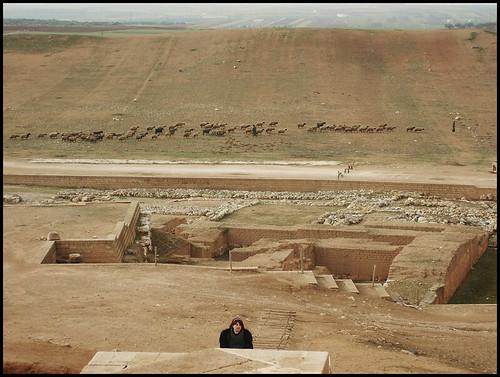 landscape countryside ruins sheep palace syria ebla idlib tellmardikh preclassicalcivilization