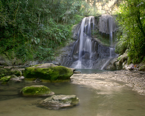 rainforest robles cascada gozalandia charcorincon