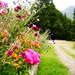 Flores de la Patagonia by Celi {diario de crecer}
