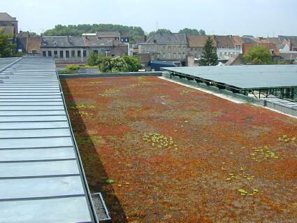 Étanchéité toiture terrasse végétalisée