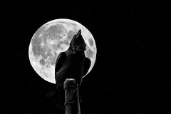 The Crow & The Moon [Explored] by Dave Morrow's Custom Creations