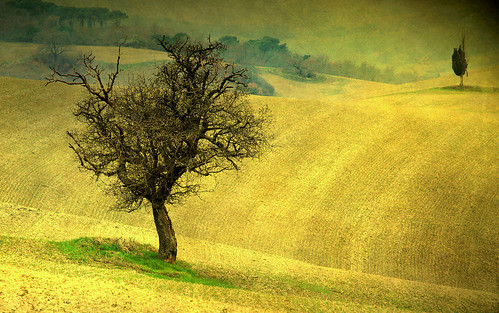 trEEs in thE fiElds by David Butali