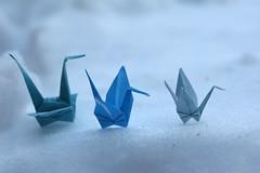 Carta Neve 7 Foto | Gru per il Giappone | 159