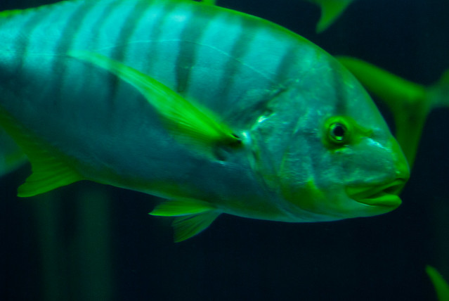 Yellow Jack 2 | Flickr - Photo Sharing!