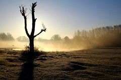 early morning stump