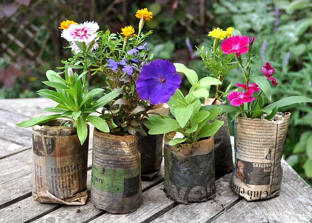 paper pots continued