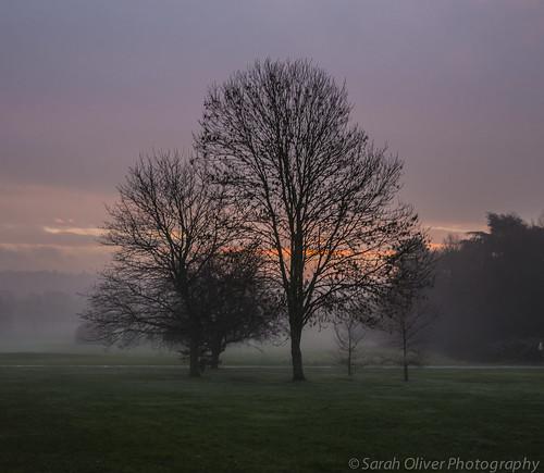 uk trees winter england mist green fog club sunrise canon john golf unitedkingdom united hill lewis kingdom partnership cookham 6d jlp