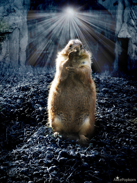Groundhog Day from Flickr via Wylio