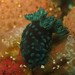 greennudi
