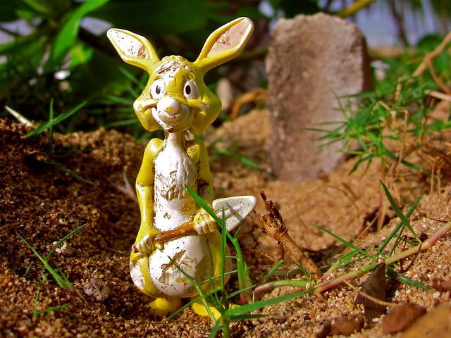 48/365 - Grave-Digging Rabbit