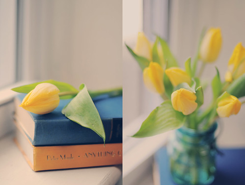 {Tulips & Light}