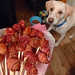 BACON Roses (and Ziggy)!
