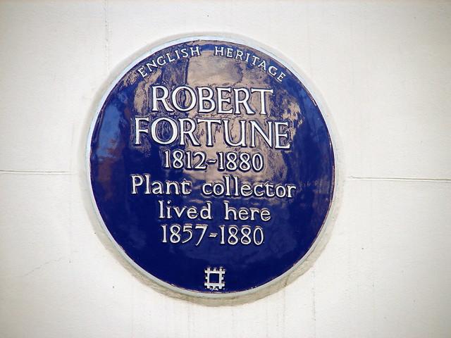 Photo of Robert Fortune blue plaque