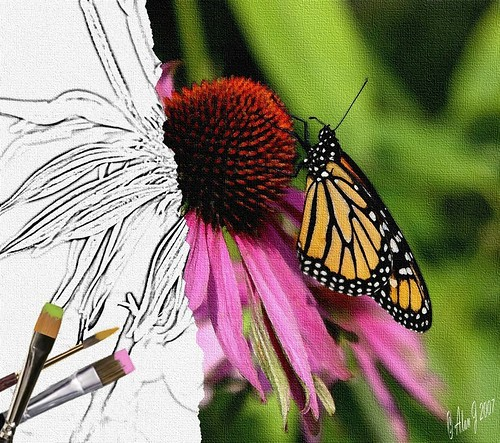 ny newyork photoshop canon butterfly upstate upstatenewyork saranaclake paulsmithscollege uppersaranaclake 40d 17x55mm mygearandme
