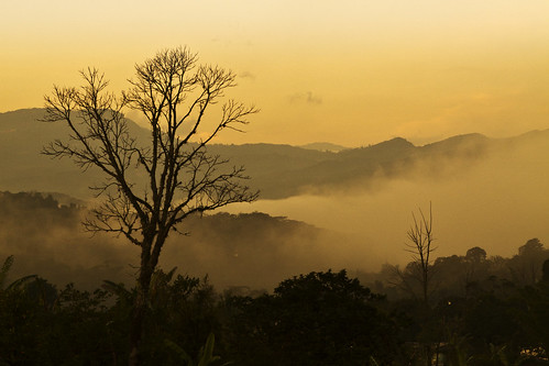 mist tree sunrise puente colombia nacional santander valey 2011