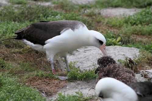 antarctic wildlife albatross