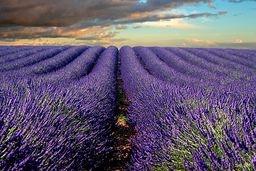 france provenza lavanda pinnaclephotography