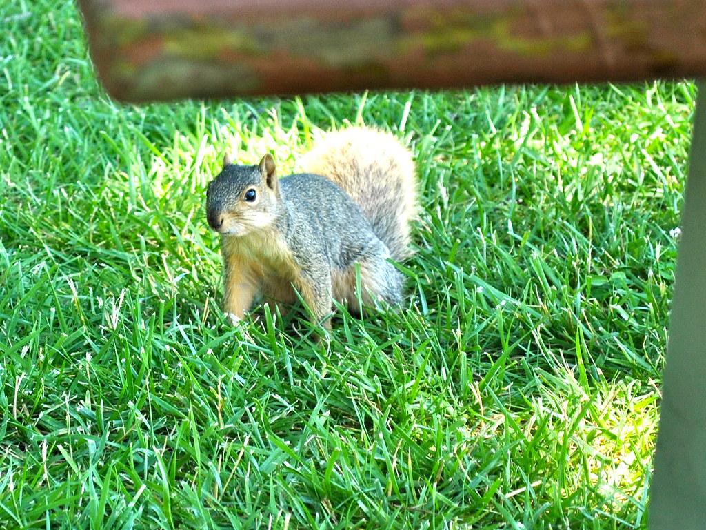 Squirrel!! | While my friend was talking to her ex-boyfriend… | Flickr