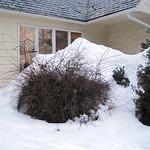 Boulder school house under snow