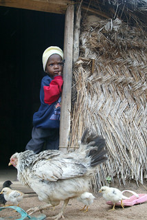 Girl and chickens in household doorway in Nigeria