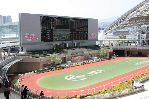阪神パドック全景