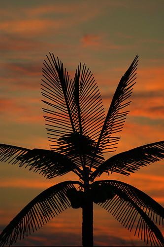 sunset oklahoma coconut orangeskies