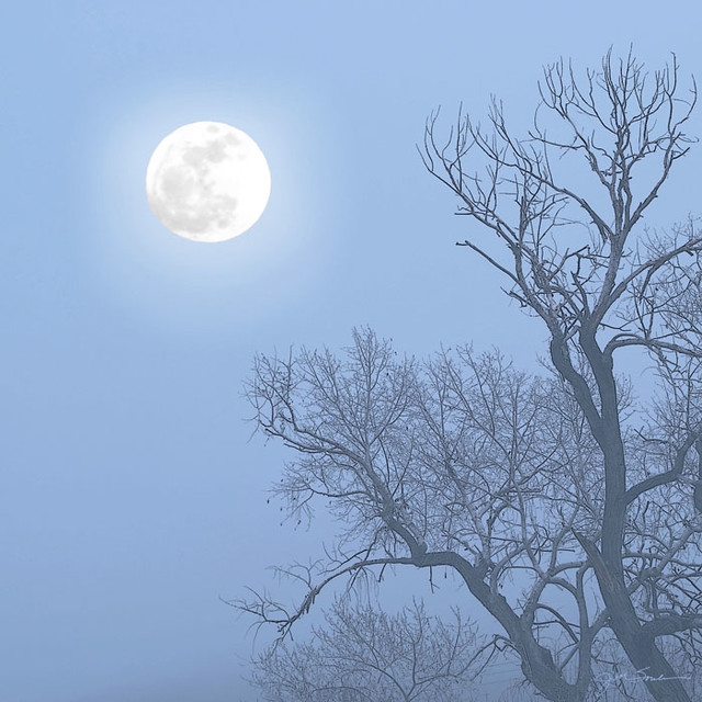 a full moon in a night sky rising over an ancient cottonwood tree twisting in the blue gray fog