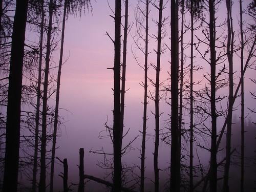 sunset mist woodland aberdeenshire ballogie