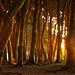 Bosque de Arrayanes milenarios, Isla Chaullín, Chile. by alexisgajardosánchez