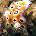 Chromodoris Leoparda
