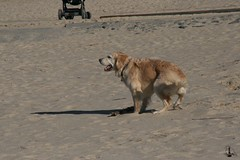 In Cuxhaven zum Hundestrand