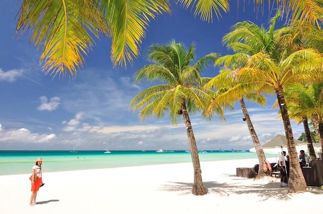 沙滩上的椰子树