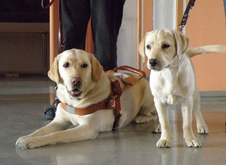 Guide dog looks at next generation