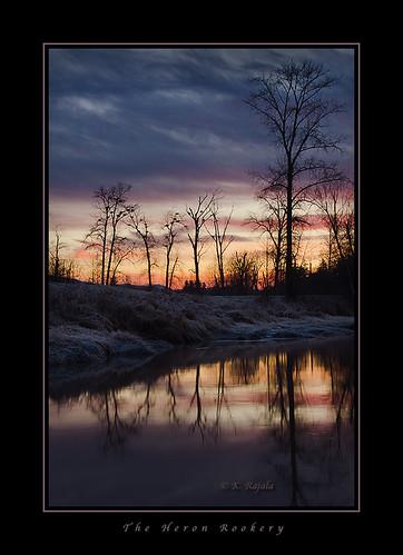 heron birds sunrise river maple ridge alouette pitt polder rookery keithgrajala