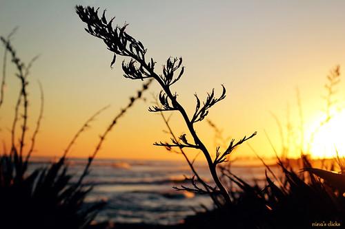 sunset beach uruguay atardecer playa puntadeleste