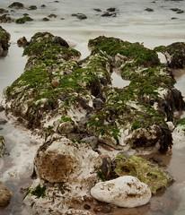 Foreshore Rocks Birling Gap
