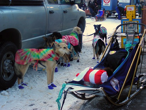 5503545123 5b9a379138 Nice Iditarod photos