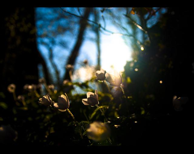 Spring. Frühling. بەهار. الربيع