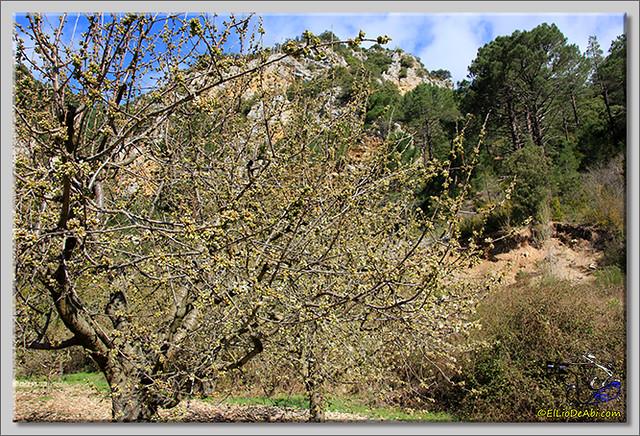 5 Valle de Caderechas Floración de los cerezos