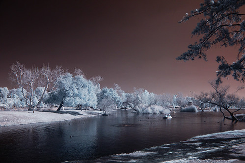 park trees sky nature water highcontrast surreal infrared soe otherworldly santeelakes platinumheartaward