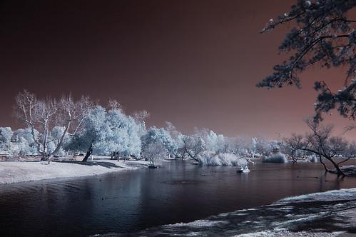 park trees sky nature water highcontrast surreal infrared soe otherworldly santeelakes platinumheartaward