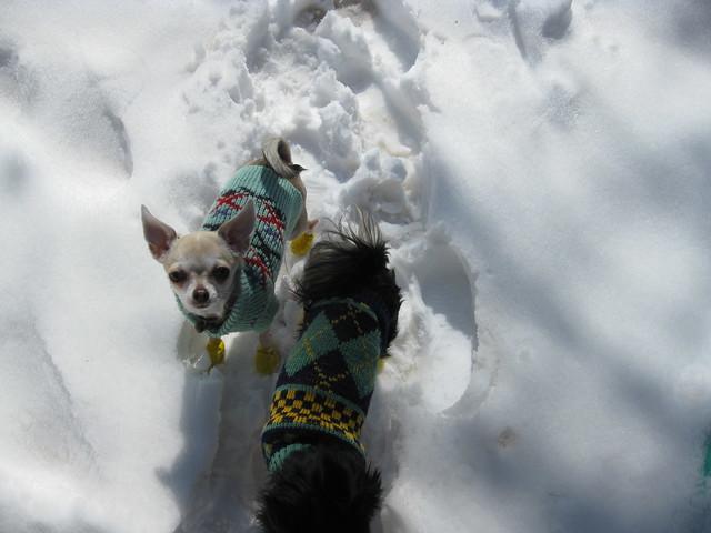 Itzl and Xoco - great snow explorers