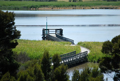 Tamar Island Wetland