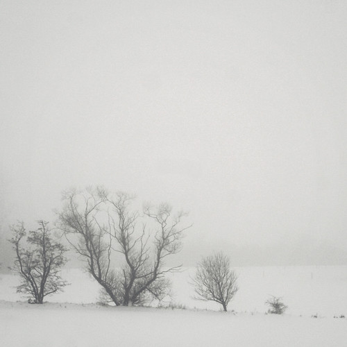 trees winter mist snow fog landscape denmark vinter træer coincidence danmark 2010 sne jylland tåge landskab winterscenery canoneos400d drivinghomeforchristmas somewhereinjutland